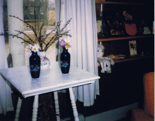 miltons-flowers-crocuses-in-february